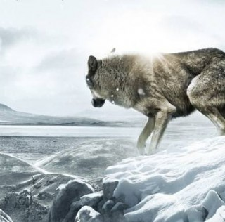 JAMES HORNER INVOLVED IN WOLF TOTEM