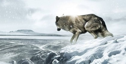 Wolf-Totem-banner