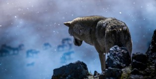wolf_totem_wolf_alone
