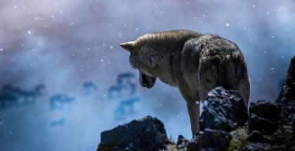 wolf_totem_wolf_alone