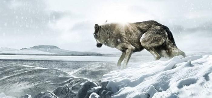 JAMES HORNER INVOLVED IN WOLF TOTEM